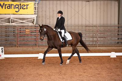 Horse 148