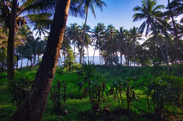 Lushy Hawaii