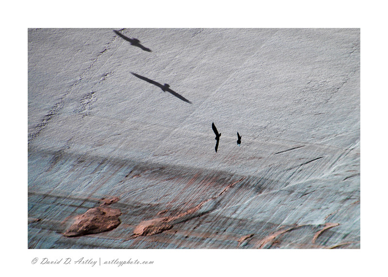 Ravens and shadows, Canyon de Chelly