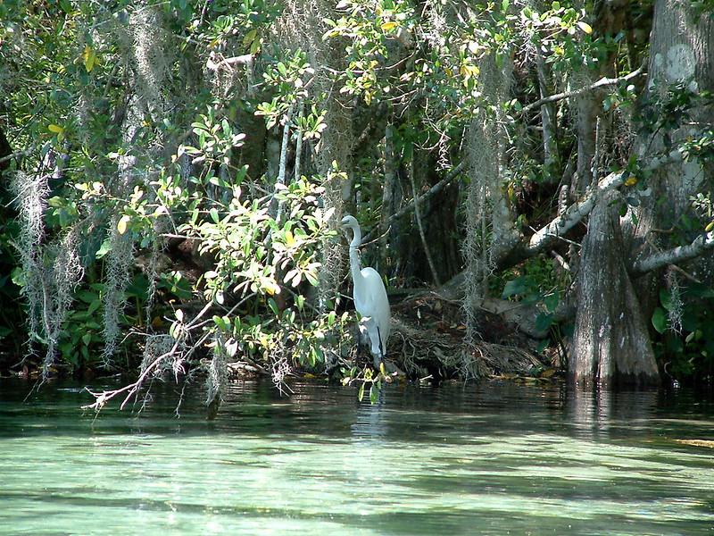 Tarpon Springs FL Wildlife.jpg
