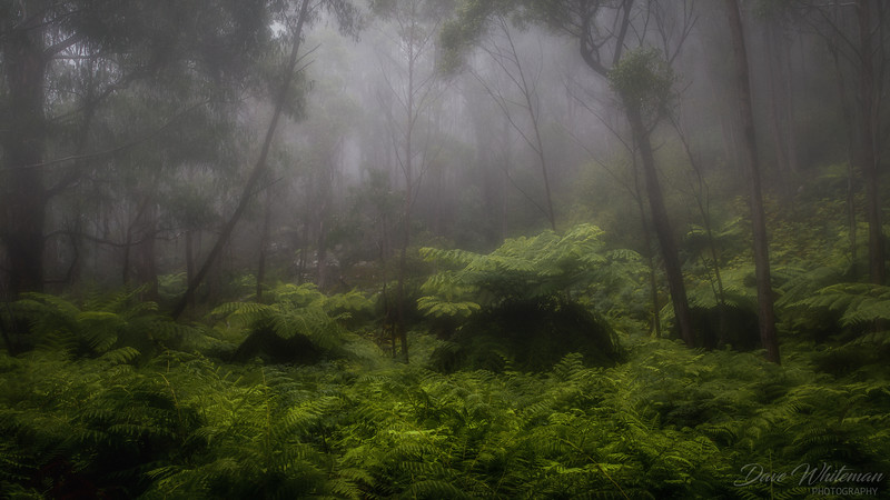 Misty Morning in the Fern Grove at Shipley
