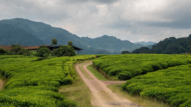 Nyugwe-Rwanda-52.jpg
