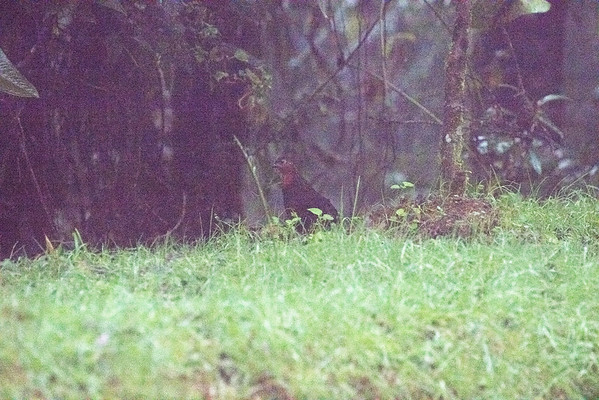 17-006 Bosque de San Antonio 11 Jan Bob
