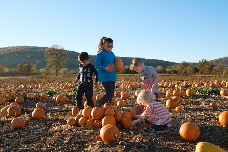 20161107 126 Great Country Farms.jpg