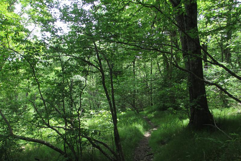 Mountains-to-Sea Trail (5,050')