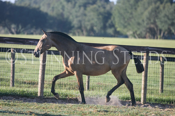 Buckskin Filly Sept 2012
