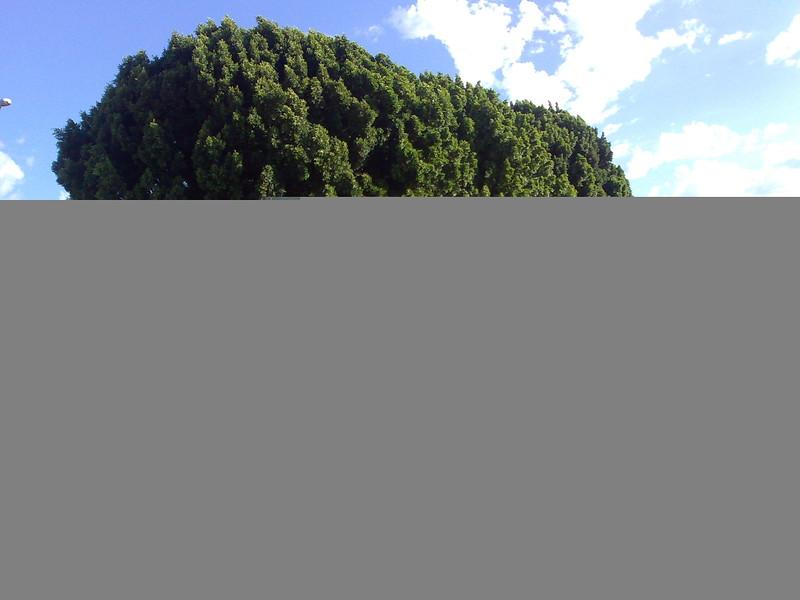 highlandpark pic 072.jpg
