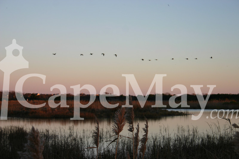 Fall Migration Over South Cape May Meadows.jpg