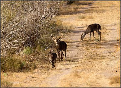 South Texas Wildlife Part 2
