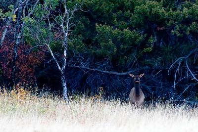 29 Day 5 Sat: Elk