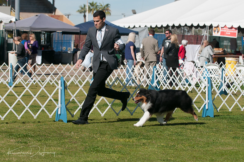 20170205_Australian Shepherds_Lost Dutchman Kennel Club-39.jpg