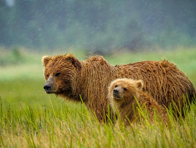 2015-07-16_Bears_Canon7D_4447.jpg