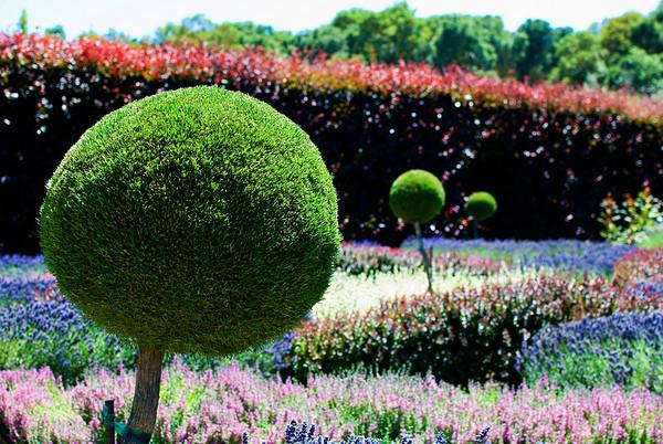 Filoli House and Garden