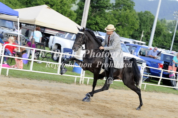 CLASS 12  TWO YR OLD OPEN WALKING