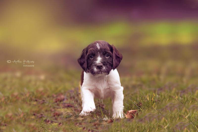 puppie 3.jpg