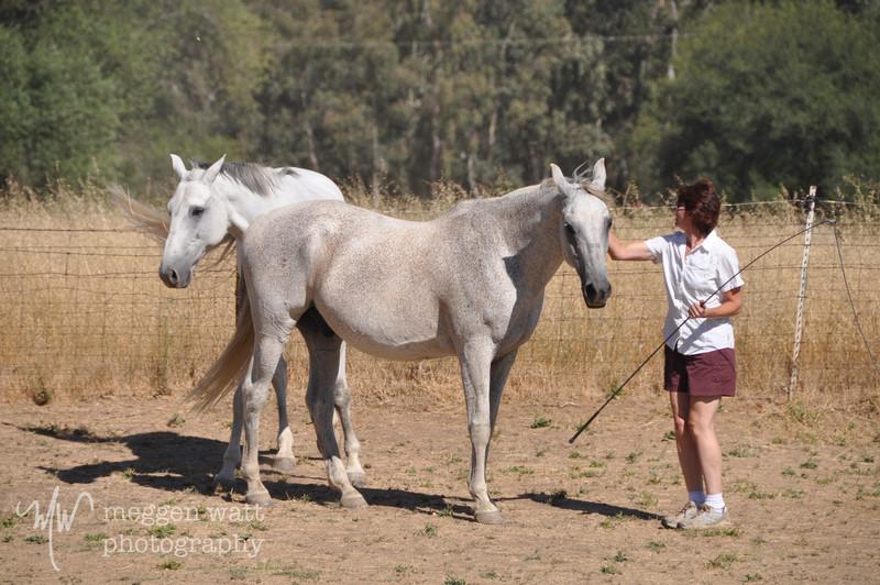 EB&Horses-105.jpg