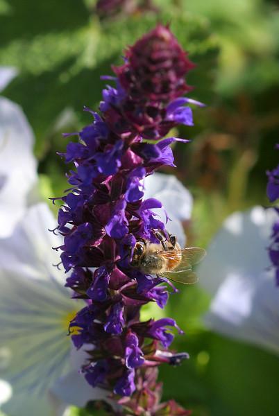 2361 Bee on Flowers.jpg