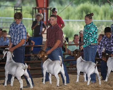 Showmanship- Goats