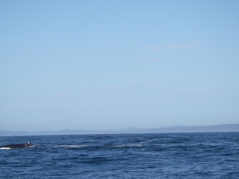 Sydney trip and Mirimbula 063.JPG