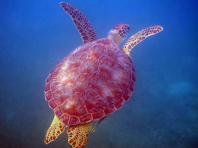 A Good Snorkel - 1 of 4