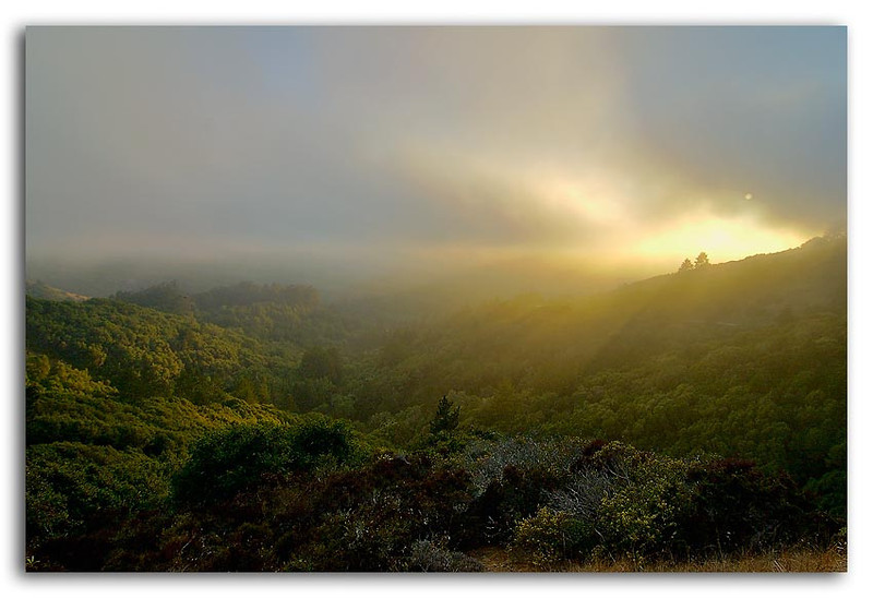 Muir Woods Sunset.jpg