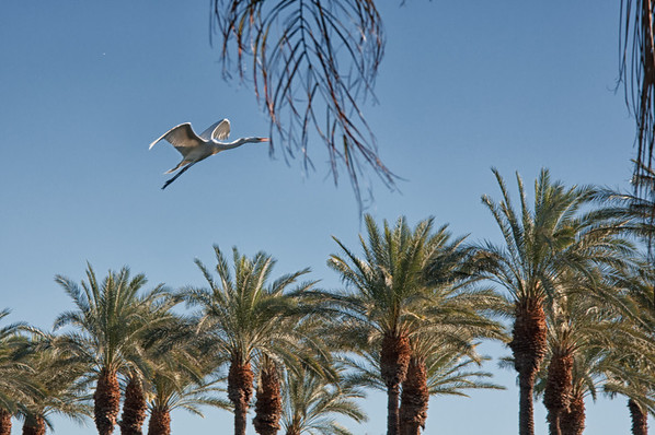 Palm Desert 2013