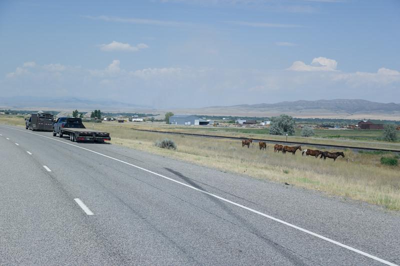 Horses Resting Manhatten, MT