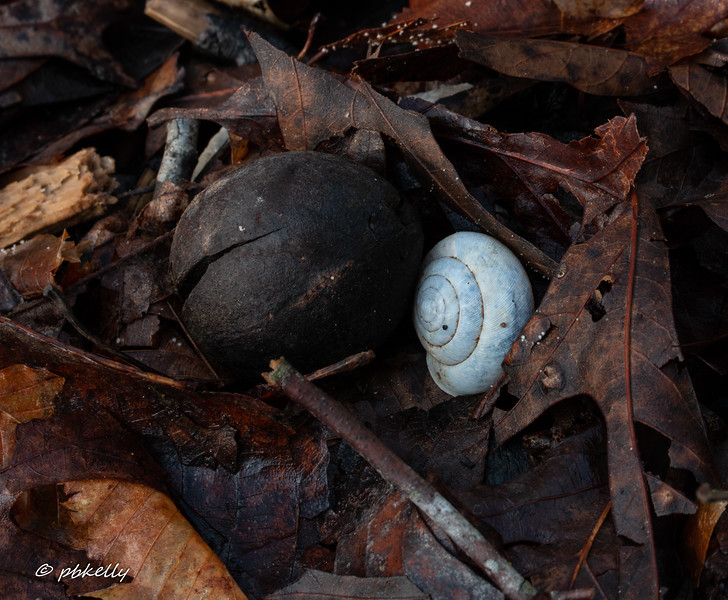 Mini Landscape with snail shell.