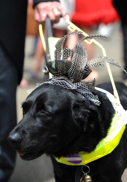 . A dog wearing a hat attends Day 3 of Royal Ascot at Ascot Racecourse on June 19, 2014 in Ascot, England.  (Photo by Stuart C. Wilson/Getty Images)