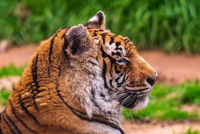 Tiger Creek Animal Sanctuary