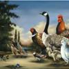 Feast or Fowl (P)