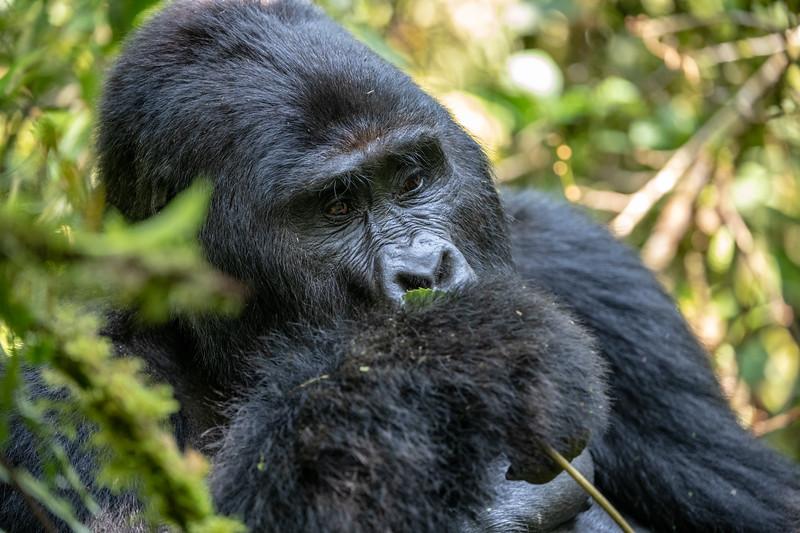 Uganda_T_Gor-1704.jpg