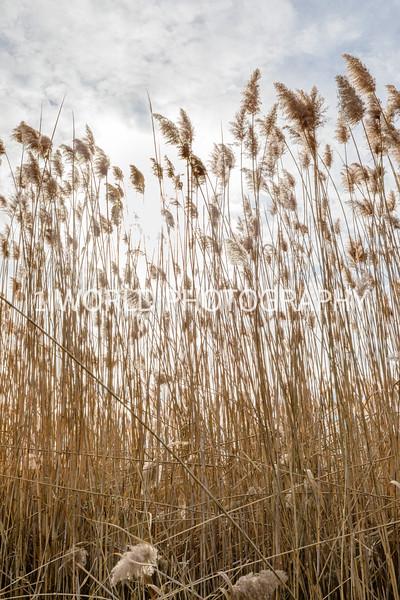 202011202020_11_20 Tall Pampas Grass026--5.jpg