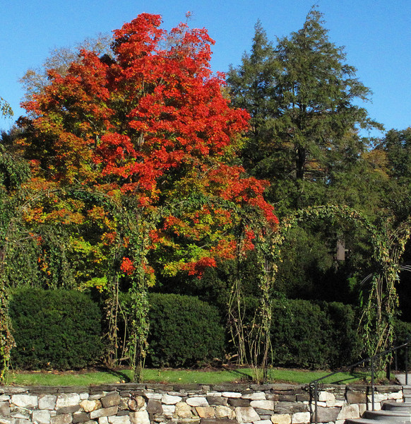 Longwood Gardens October 2008