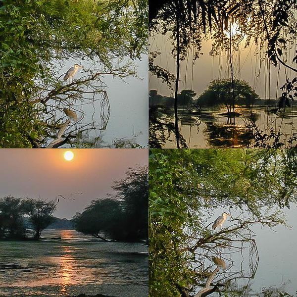 collage3-2.jpg