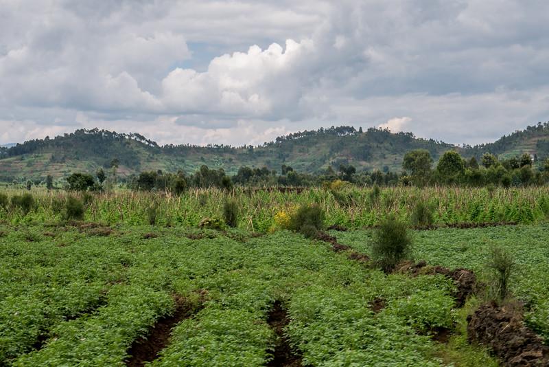 Ruhengeri-Rwanda-3.jpg