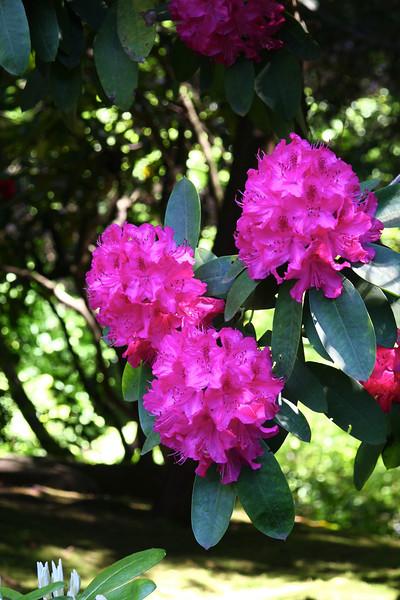 Portland Japanese Garden 6-3-11  1775.jpg