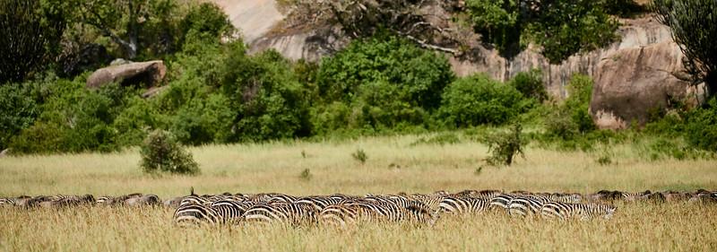 Tanzania 2013 1882.jpg