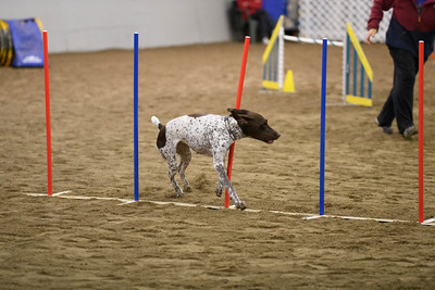 Princeton Open/Novice AKC Agility Trial October 2