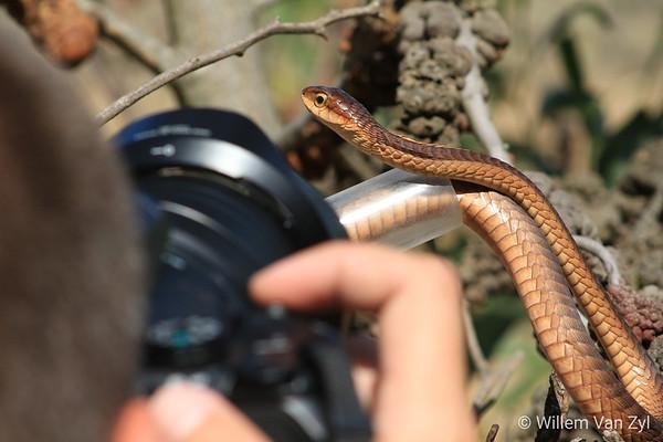 Snake Photography