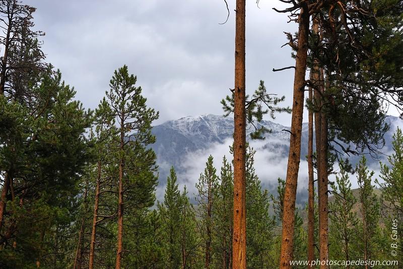 Idaho: 2014