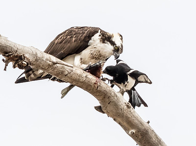 Sharing Lunch