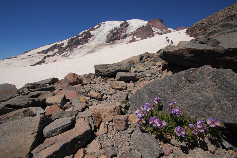 Mt. Rainier NP - Aug 201019.JPG