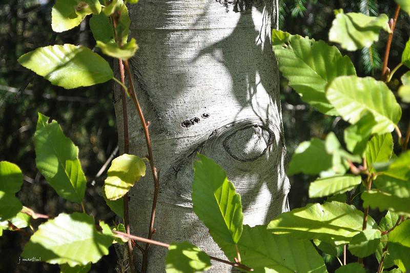 bark and shadow 11-5-2012.jpg