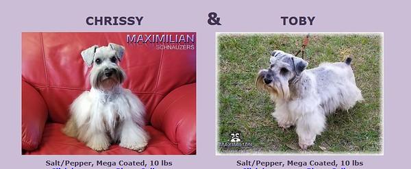 Chrissy & Tobby Puppy, DOB 6/25/2021