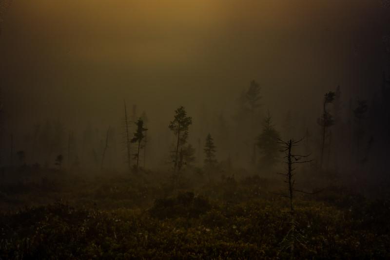 Sept 24-2017-Mystery forest_01-1.jpg