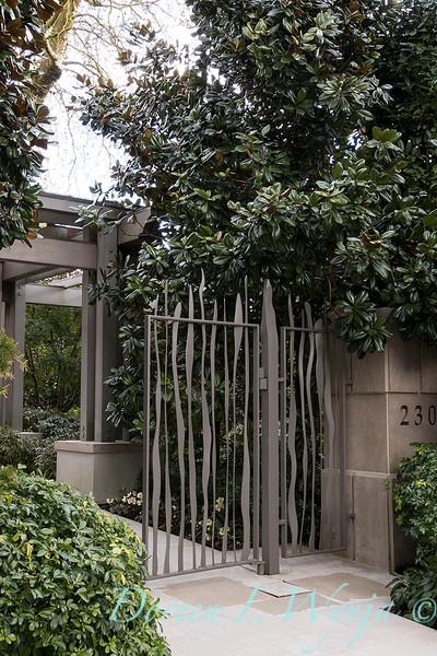 Magnolia grandiflora - front entry iron gate_1020.jpg