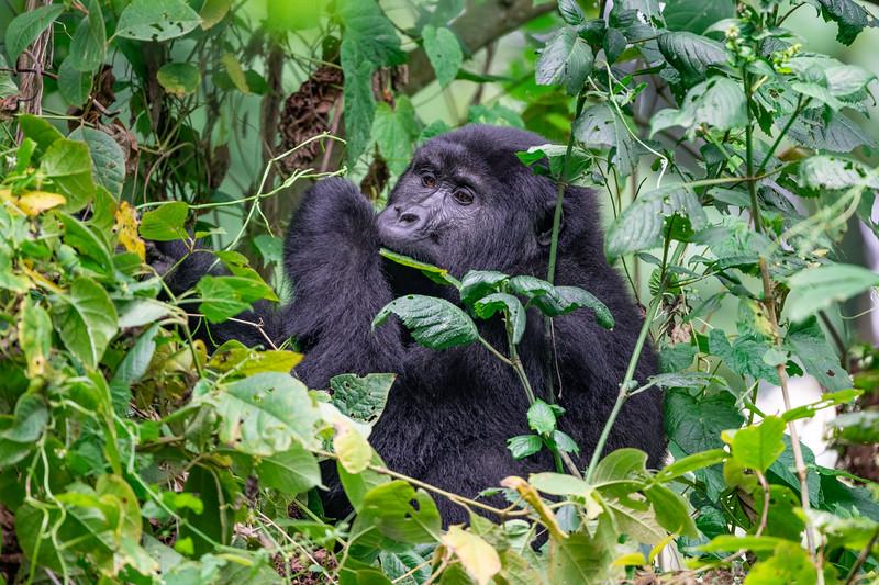Uganda_T_Gor-2228.jpg