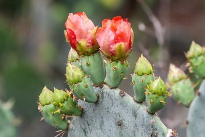 Texas Wildflowers - 2013