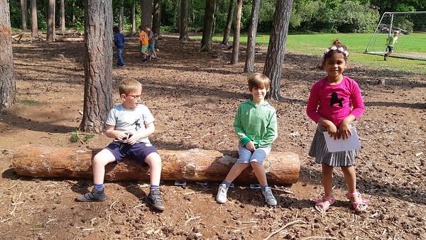 Dieren maken sporen in het bos (1A)